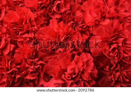 Many of rich red carnations.