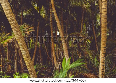 many palm trees in a mexican beach creating a wonderful view. texture