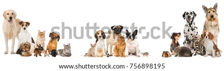 many pets isolated on white...