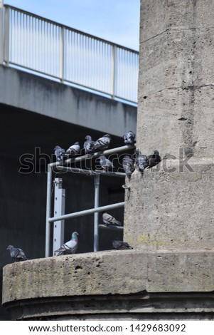 many Pigeons on a Scaffold #1429683092