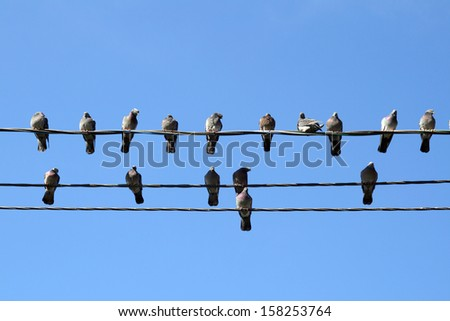 Many pigeons on an electric wires. Doves sitting on a power lines over sky  #158253764