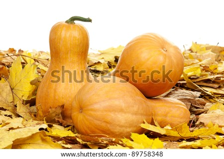 Many pumpkins of different shapes and sizes surrounded by leaves on white background - stock photo