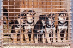 Many puppy dogs locked in the cage waiting for adoption