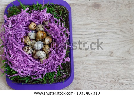 many quail eggs lie on the violet decor in the form of a nest, on the green grass that grows in the ground on a tray standing on a table  #1033407310