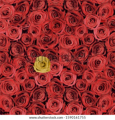 Many red roses with one yellow rose