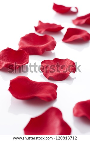 Many rose petals on white background