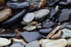 many rough wet stones background. nice backdrop with natural sea pebble in different sizes and shapes.
