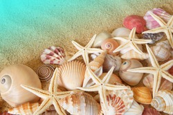 Many seashells and sea starfishes on sand background, sea and beach concept