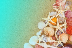 Many seashells and sea starfishes on sand background, sea and beach concept.