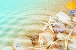 Many seashells and sea starfishes on sea bottom