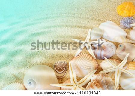 Many seashells and sea starfishes on sea bottom