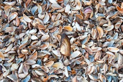 Many small sea shells, natural background