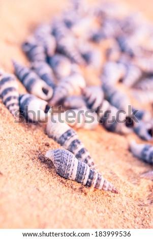 many small seashells on sandy beach, close up