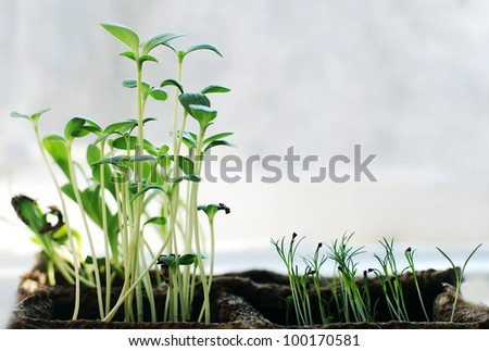 Many small young fresh green plants growing in springtime - stock photo
