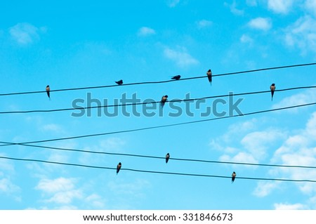 Many sparrow bird on an electric wires. Doves sitting on a power lines over sky #331846673