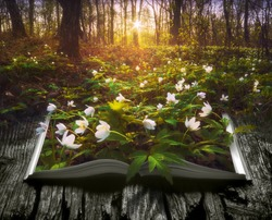 Many spring flowers on the pages of an open magical book in a deep fairytale forest. Nature concept.