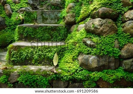many stones covered with green moss in morning. image for nature,forest,plant concept