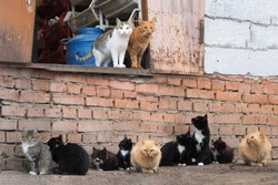 Many stray cats against a brick wall. Cats are dirty, they get sick, cats need a vet and a new home