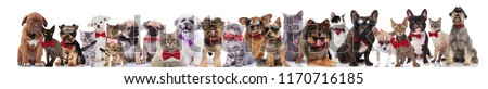 many stylish dogs and cats of different breeds wearing bowties while standing, sitting and lying on white background