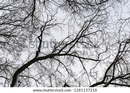 many tangled branches silhouette background #1281137218