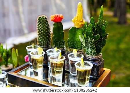 many tequila glasses with lemon and cactus #1188236242