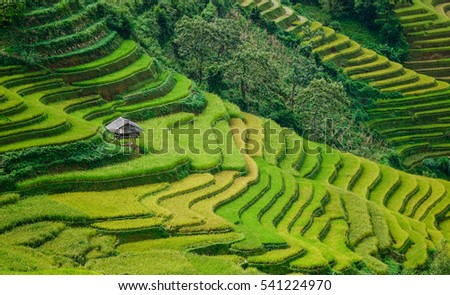 Many terraced rice fields at sunny day in Sapa, Northern Vietnam. The northwest market town of Sapa is colorful and charming in Vietnam.