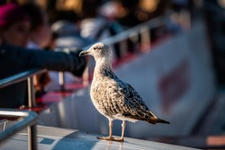Many tourists people sitting in boat cruise ship tour in blurry blurred background bokeh on Thames River with one seagull standing in London, UK