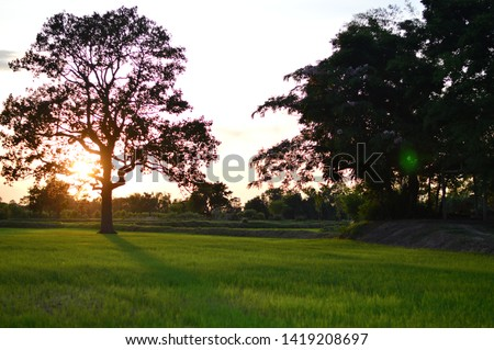 Many tree shadows And green grass With the sun shining in the evening In the evening #1419208697
