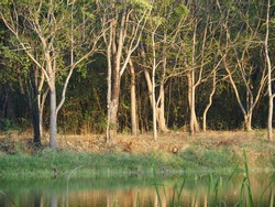 Many trees were planted on the river below, surrounded by grass and the reflection of the trees in the water.