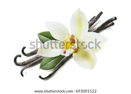 Many vanilla sticks, flower and leaves isolated on white background