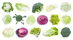 many various headed cabbages (romanesco, broccoli, cauliflower, white cabbage, red cabbage, napa cabbage, savoy cabbage, etc) isolated on white background