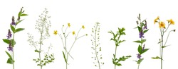 Many various stems of meadow grass with yellow, white and purple flowers isolated on white background