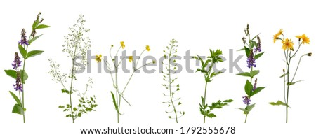Photo of  Many various stems of meadow grass with yellow, white and purple flowers isolated on white background
