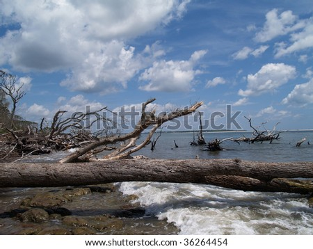 Many weathered fallen trees among the waves on an ocean beach.