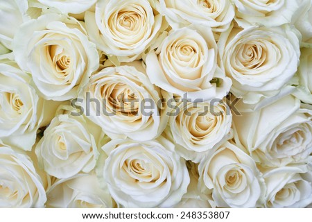 Many white roses as a floral background