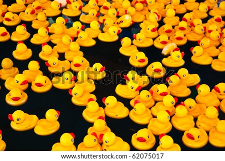 Many yellow ducks floating in the  pool