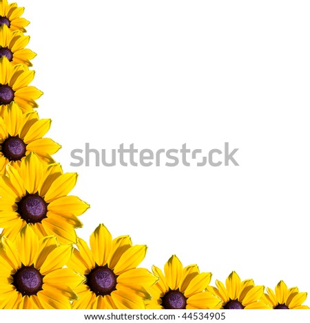 many yellow flower corner on white background