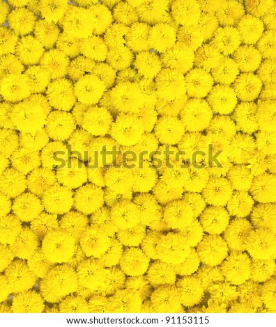 many yellow flowers for background