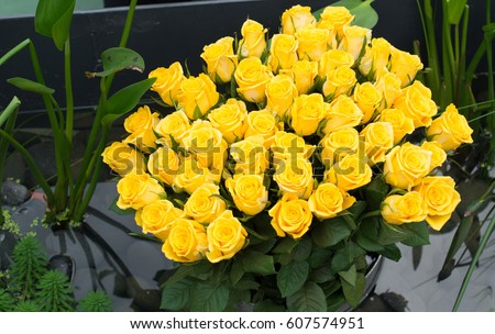 Many yellow roses.