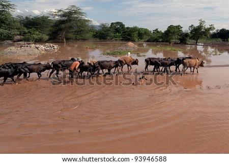 MANYARA, TANZANIA - NOVEMBER 28: The catastrophic debris flow destroyed a road between national parks Manyara and Ngorongoro. Car traffic was restored on the same day, on November 28, 2011 in Tanzania - stock photo