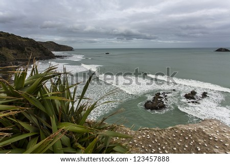 Maori Bay, Auckland New Zealand/ Maori Bay is well known for its quality surf and Gannet colony