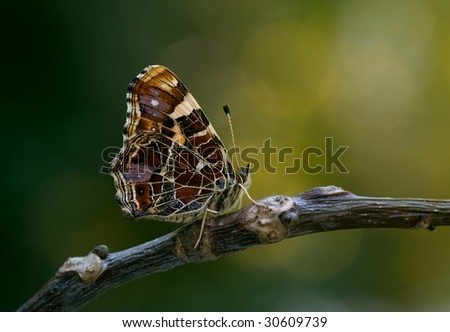 map butterfly - stock photo