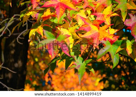 Maple foliage in sunny day. Autumn background #1414899419