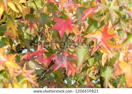 maple leaf in the autumn #1206659821
