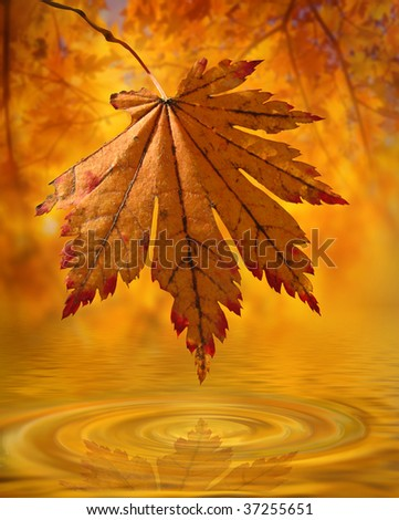 Maple leave over golden water against autumn wood