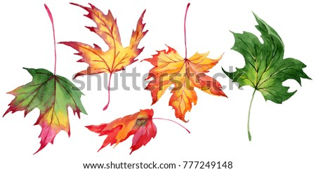 Maple leaves in a watercolor style isolated. Aquarelle maple leaves for background, texture, wrapper pattern, frame or border.