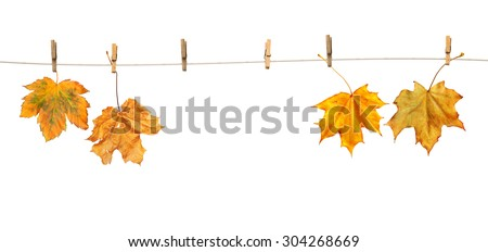 Maple leaves on clothespins with the word autumn, isolated on white background #304268669