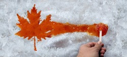 Maple taffy leaf or boiled tree sweet boiled sap syrup on snow as a traditional spring food culture from Quebec Ontario Canada and New England produced in a sugar shack.