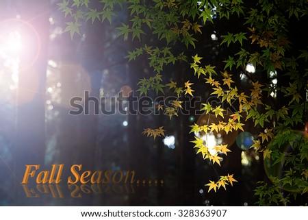 Maple tree in autumn, Japan