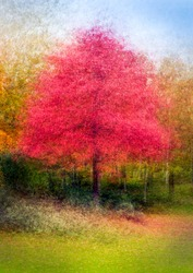 Maple tree in autumnal foliage shot in an artistic, impressionist way